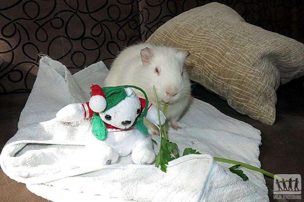 Juško sa svojom igračkicom (Foto: Moja Hercegovina)